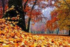 Der ruhige Herbstwald hat etwas Magisches: Die Blättern schimmern von Gold über Rot bis Braun, das Laub raschelt und durch die Bäume dringt diffuses Licht - es wäre kaum verwunderlich, wenn Fabel-Wesen auf der Lichtung erschienen. #wallpaper