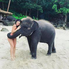 ♡M o n i q u e.M💜 Baby Animals, Funny Animals, Animals And Pets, Cute Animals, Animals Beautiful, Beautiful Creatures, Elephant Sanctuary, Adventure Travel, Cute Pics