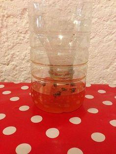 Voici comment faire un piège à mouches avec une bouteilles en plastique et du sirop, sucre ou bière. Et aussi des trucs et astuces contre les mouches.