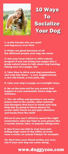 10 Ways To Socialize Your Dog