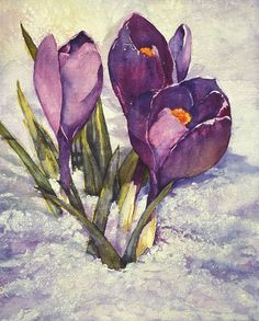 Charlotte Peterson Watercolor These flowers bloom in my mom's garden every year right around the time school gets out in May! :) #watercolorarts