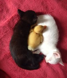 Yin, Yang And Quack