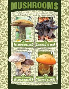 SLM16114a Mushrooms (Boletus edulis; Craterellus cornucopioides; Lentinula edodes; Amanita caesarea)