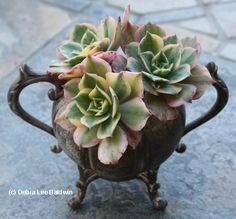 Kathy McCarthy of the Del Mar, CA, Rose Society, enjoys hunting for second-hand treasures in which to plant succulents.