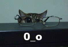 Eye see you Kitty!