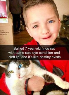 Lustige Katzenbilder - Humour Ninja - Funny Memes and Funny Pictures - Pin Cute Funny Animals, Cute Baby Animals, Funny Cute, Cute Cats, Hilarious, Pretty Cats, Fancy Cats, Sweet Stories, Cute Stories