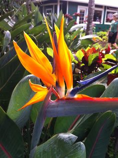 Bird of Paradise Finding God, Landscaping Plants, Diy Projects To Try, Plant Decor, Horticulture, Houseplants, Beautiful Gardens, Color Patterns, Planting Flowers