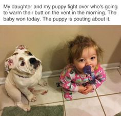 23 Hilarious Animal Memes So Cute They'll Make You LOL Other names for animals Need a Laugh? These Animal Memes Should Do the Trick! Funny Doggo Memes That Will Get Your Tail Wagging Top 40 Funny animal pi. Cute Animal Memes, Funny Animal Quotes, Animal Jokes, Cute Funny Animals, Funny Animal Pictures, Cute Baby Animals, Funny Cute, Hilarious Animal Memes, So Cute Meme