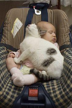 Kitty seatbelt!
