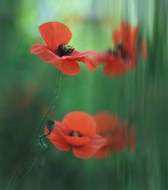 14 Beautiful Flower Photography
