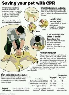 important to know if you have a furry friend