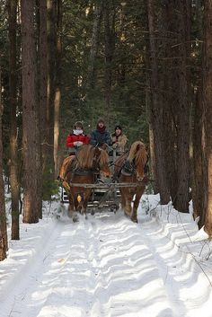 Let's take a sleigh ride through the snow! -- I don't know if this is Mackinaw Island, there isn't much snow, but it does bring back memories of a Christmas holiday. Fly onto the island in winter and this is your transportation into town. I Love Snow, I Love Winter, Winter Fun, Winter Travel, Country Christmas, Winter Christmas, Christmas Scenes, Christmas Time, Prim Christmas