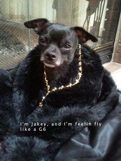 Looks just Barkley.  gangsta dog.