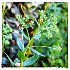 un giardino in diretta - blog di giardini, giardinaggio, natura e di artigianato: In diretta dal giardino: buona domenica! 315/365