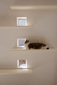 9 Tips For Choosing The Best Cat Urine Cleaner Cat Climbing Shelves, Cat Shelves, Room Shelves, Cat Hotel, Diy Cat Tree, Living With Cats, Cat Run, Cat Hacks, Animal Room
