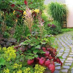 Die 15 Besten Bilder Von Garten Shade Perennials Bellis Perennis