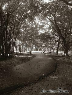 Camino Ecológico