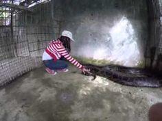 Big Snake in Bohol