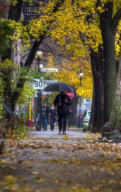 Rue Laval, square Saint-Louis, Montréal
