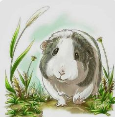 Miniature Pet Pigs – Why Are They Such Popular Pets? – Pets and Animals Like Animals, Animals And Pets, Baby Animals, Cute Guinea Pigs, Guinea Pig Care, Gine Pig, Hamsters, Funny Mouse, Pig Drawing