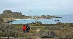 Reserva Nacional Pinguino de Humboldt: Un paraíso en las costas del norte. turismonacional.cl Costa, Water, Outdoor, Destinations, Gripe Water, Outdoors, The Great Outdoors, Aqua