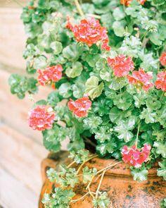 57 отметок «Нравится», 1 комментариев — WEDDING PHOTOGRAPHERS IN ITALY (@kirandiraphotography) в Instagram: «We believe in summer ☀️ #tuscany» Instagram Blog, Italy Wedding, Wedding Engagement, Destination Wedding, Floral Wreath, Fine Art, Elopements, Believe, Floral Crown