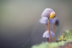 Ladybug and the toadstools by Judith Borremans / 500px