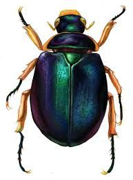 Image result for beetle tattoo