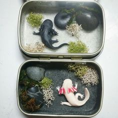 Polymer water dogs & resin in Altoid tin