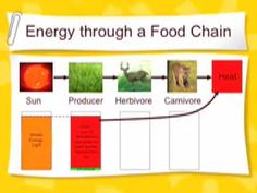 L2 Food Webs and Energy 4