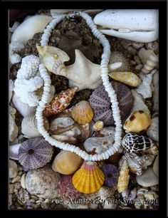 Classic Hawaiian surfer style Aloha! Natural shiny white North Shore Puka Shells washed up from the ocean surf and an amazing jumbo sized classically colored Sunrise Shell centerpiece pendant in this traditional necklace design originating on Oahu, Hawaii! This amazing bold yellow, pink and white Sunrise Shell is a full 1 1/2 inches in size! An exceptional mature seashell with very thick ribs and perfectly shaped! This local Hawaiian Island style Puka Shell lei necklace is 18 inches in…