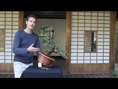 Learn how to grow a Bonsai tree yourself! This step-by-step guide explains Bonsai care, cultivation and design. Bonsai Tree Care, Indoor Bonsai Tree, Mini Bonsai, Bonsai Trees, Ikebana, Best Hobbies For Men, Fun Hobbies, Bonsai Garden, Garden Trees