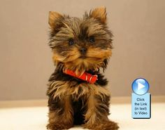 Cute puppy slideshow video!  http://www.dogvideooftheweek.com/videos/view/2454  #dvotw