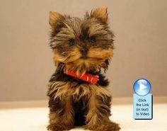 Cute puppy slideshow video!  http://www.dogvideooftheweek.com/videos/view/2454  #dvotw