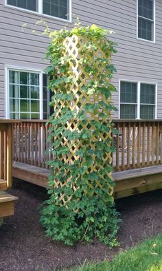 Side of deck with clematis-- Lattice Fence Panel Can be Great Garden Trellis on the Corner of a Deck or Patio Diy Trellis, Garden Trellis, Garden Fencing, Deck Trellis Ideas, Hops Trellis, Lattice Ideas, Privacy Trellis, Lattice Garden, Tomato Trellis