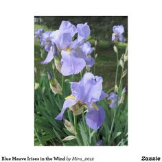 Blue Irises Blanket for Lovers of Flowers - birthday gifts party celebration custom gift ideas diy Birthday Gifts For Grandma, Mother Birthday, Best Birthday Gifts, Grandma Gifts, 25th Birthday, Birthday Diy, Blue Iris Flowers, Love Flowers, Get Well Gifts