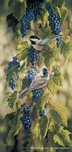 Birds in Art - Chickadees and grapes - Rosemary Millette