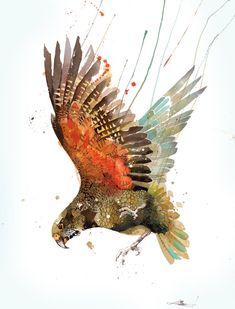 Official Rachel Walker Page. New Zealand watercolour, spray paint, pen and ink artist creating splashy celebrations of native and rare animals. Bird Artwork, Cool Artwork, Amazing Artwork, Watercolor Painting Techniques, Watercolor Paintings, Watercolours, Rachel Walker, Ballet Posters, Street Art