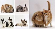 Kittens and their Matching Bunnies «TwistedSifter