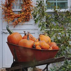 Colorful leaves & pumpkins... lots of them. 😉 Looking a little bit like autumn over here. #autumn #fall #pumpkins #berries #sunday #weekend #home #decor #warm #september #cottage #country #countryliving #cottageliving #sheshed #greenhouse #nature #naturaldecor