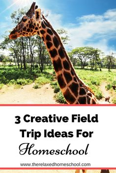 Field trips are the highlight of any child's day. Whether you homeschool or your kids go to public school, field trips are a great way for hands on and visual learning. Check out these 3 creative field trip ideas for your next learning adventure. Visual Learning, Fun Learning, Tot School, Public School, Homeschool Math, Homeschooling Resources, Educational Activities, Travel With Kids, Field Trips