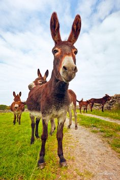 If you wonder what a donkey can eat, you can find all important feeding facts here. Take good care of your donkey with best information. Beautiful Horses, Animals Beautiful, Doma Natural, Farm Animals, Cute Animals, Wild Animals, Cute Donkey, All Gods Creatures, Zebras