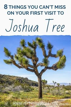 There are so many things to do in Joshua Tree National Park, but I've narrowed it down to a short list of things you really can't miss. I've also included a bunch of helpful information to help you navigate through Joshua Tree and make the most of your time. Have a great adventure!