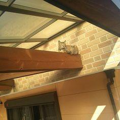 Pinを追加しました!/日向ぼっこなんですかね? 降りれなくなってる模様(笑)  #猫