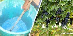 Gardening Tips, Home And Garden, Entertaining, Nature, Flowers, Plants, Homework, Garden Ideas, House