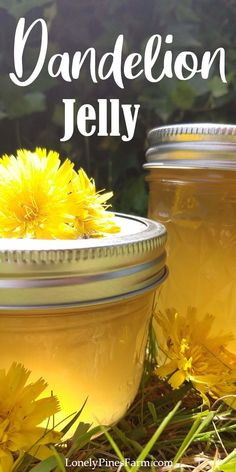 Dandelion jelly is a deliciously perfect way to capture the taste of summer. Jelly Recipes, Jam Recipes, Canning Recipes, Dandelion Jelly, Dandelion Wine, Dandelion Recipes, Dandelion Jam Recipe, Water Bath Canning