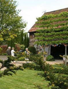 Beautiful pleached trees in one of the many beautiful gardens that will be open on May 11th - love this garden in particular