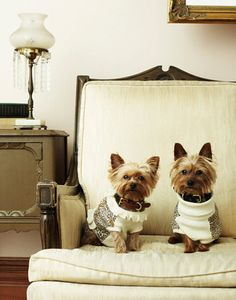 Zoe and Cocoa  2 Yorkshire Terriers  8 x 10 by siblingrivalrie, $25.00