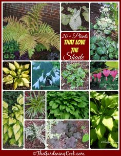 A collection of more than 20 plants that love the shade - see them all at thegardeningcook.com/plants-for-a-shade-garden