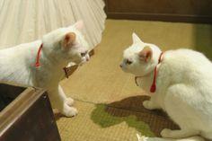 劇場版『猫侍』ブルーレイ&DVD発売・レンタル決定記念 遂に3匹の玉之丞が集結した!初公開「天使すぎる玉之丞」